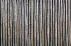 Bamboo  ( Filtered image processed vintage effect. ) Stock Image