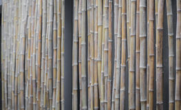 Bamboo ( Filtered image processed vintage effect. ) Stock Photo