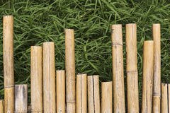 Bamboo Floor on Green Grass. Stock Photo