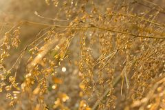 Bamboo flowers. That reflect the sun after rain royalty free stock images