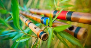 Bamboo flutes on tree branches. Three colourful bamboo flutes placed on tree branches with young green leaves Stock Photo
