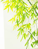 Bamboo foliage foreground Royalty Free Stock Photo