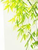 Bamboo Foliage Foreground Royalty Free Stock Photo