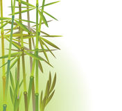 Bamboo forest. Vector illustration of bamboo forest Stock Photography