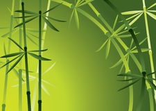 Bamboo forest. Vector illustration of bamboo forest Stock Photo