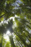 Bamboo forest. Royalty Free Stock Images
