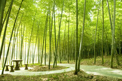 Bamboo forest Stock Images