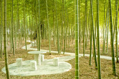 Bamboo forest royalty free stock photo