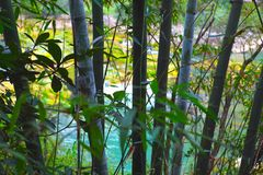 Bamboo forest. Natural green background Stock Photography