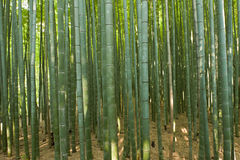 Bamboo forest. Beautiful bamboo forest in near Arashiyama, Japan Stock Images