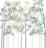 Bamboo forest. Colorful background with bamboo forest Royalty Free Stock Images