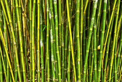 Bamboo forest. With written words Stock Photos