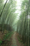 In bamboo forest Royalty Free Stock Images