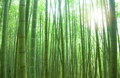 Free Bamboo Forest Stock Photography - 22936762