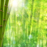 Bamboo forest. Abstract summer backgrounds with bright sun and beauty bokeh stock image