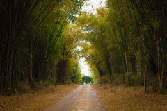 Bamboo forest. The path to the bamboo forest Stock Image