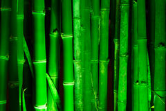Bamboo forest. Vertical lines of bamboo illuminated with green light Stock Photography