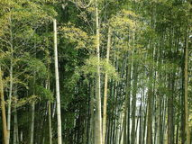 Bamboo Forest. In Kyoto, Japan stock images