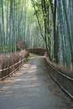 Bamboo forest. Walk in kyoto Royalty Free Stock Photo