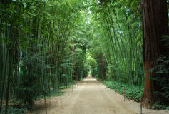 Bamboo forest. Asian Bamboo forest in a park in Anduze, Languedoc Roussillon, France Stock Image