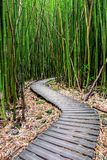 Bamboo Forest along Pipiwai Trail in Maui which can be found near the Road to Hana. Hawaii royalty free stock photo
