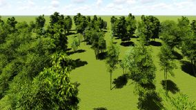 Bamboo forest animation. Beautiful decarative bamboo forest animation stock footage