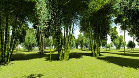 Bamboo forest animation stock footage