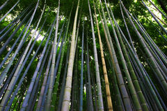 Bamboo forest in Arashiyama Royalty Free Stock Images