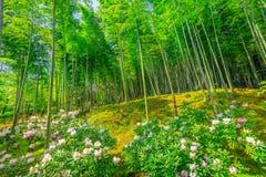 Bamboo forest in Arashiyama. Flowered Japanese garden near bamboo forest of Tenryu-ji Zen Temple in Arashiyama District, Kyoto, Japan. Spring season. The garden Royalty Free Stock Photo