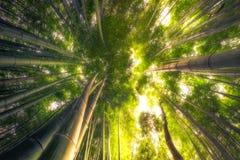 Bamboo Forest. Arashiyama bamboo grove, Kyoto Japan Stock Images