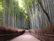 Bamboo forest, Arashiyama Japan. Early morning of Bamboo Stock Photo