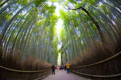 Bamboo forest Arashiyama in japan Royalty Free Stock Photo