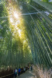 Bamboo forest at Arashiyama Stock Image