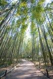 Bamboo Forest in Arashiyama, Kyoto. Japan Stock Images