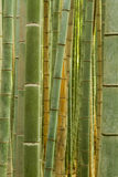 Bamboo forest in Arashiyama Stock Photos