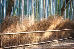 Bamboo Forest in Arashiyama, Kyoto. Japan Stock Image