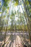 Bamboo Forest in Arashiyama, Kyoto. Japan Stock Photo