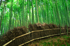 Bamboo forest. In  Arashiyama Kyoto Japan Stock Photo
