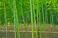 Bamboo forest. In Arashiyama Kyoto Japan Royalty Free Stock Photos