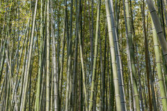 Bamboo forest at Arashiyama Royalty Free Stock Photo