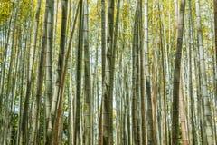 Bamboo forest at Arashiyama Stock Photography
