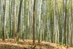 Bamboo forest at Arashiyama Royalty Free Stock Photos