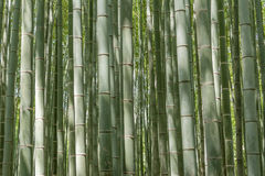 Bamboo forest at Arashiyama Stock Photo