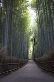 Bamboo forest. Stock Image