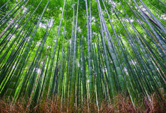 Bamboo forest, Arashiyama, Kyoto, Japan Royalty Free Stock Image