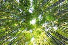 Bamboo forest in Arashiyama Royalty Free Stock Photo