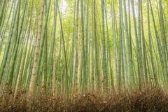 Bamboo forest. In Arashiyama, Kyoto, Japan Stock Images