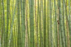 Bamboo forest. At Arashiyama, Kyoto, Japan Royalty Free Stock Image