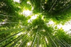 Bamboo forest, Arashiyama, Kyoto, Japan Stock Images
