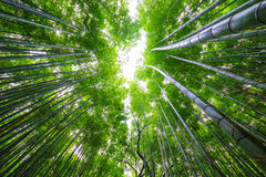 Bamboo forest, Arashiyama, Kyoto, Japan. Bamboo forest, Arashiyama area, Kyoto, Japan Royalty Free Stock Photography